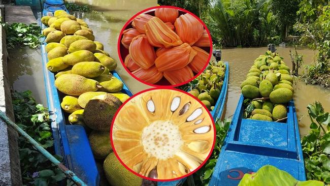 Giá mít Thái hôm nay 3/8: 2 loại mít hot nhất thị trường là gì, sao 1 loại trồng nhiều, 1 loại trồng ít? - Ảnh 1.