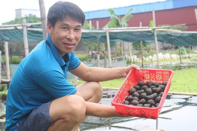 """Nam Định: Nuôi con """"siêu đẻ"""" bò quanh quẩn trong ao bèo, anh nông dân 8X thu nhập hàng trăm triệu mỗi năm - Ảnh 1."""