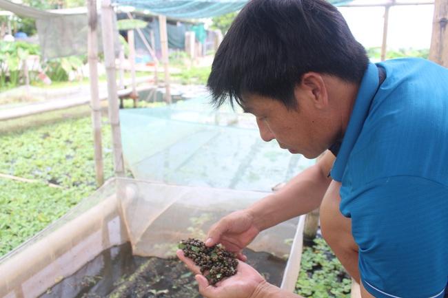 """Nam Định: Nuôi con """"siêu đẻ"""" bò quanh quẩn trong ao bèo, anh nông dân 8X thu nhập hàng trăm triệu mỗi năm - Ảnh 3."""