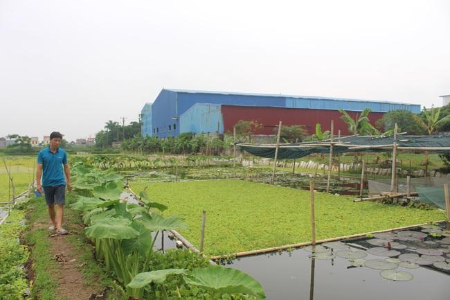 """Nam Định: Nuôi con """"siêu đẻ"""" bò quanh quẩn trong ao bèo, anh nông dân 8X thu nhập hàng trăm triệu mỗi năm - Ảnh 4."""