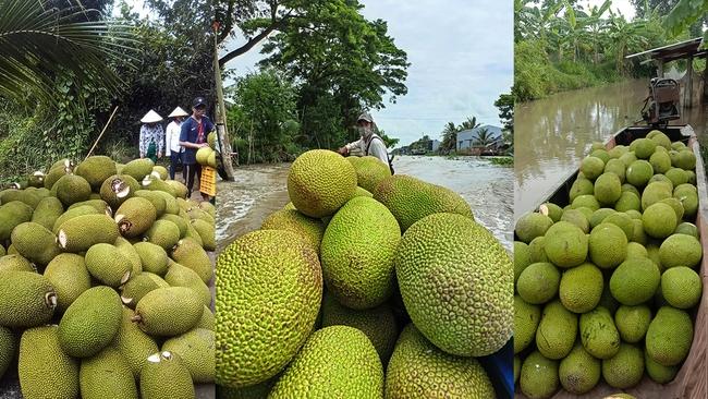 Giá mít Thái hôm nay 4/8: Vì sao nông dân, thương lái và vựa đẩy mạnh mua bán mít Thái trên mạng xã hội? - Ảnh 1.