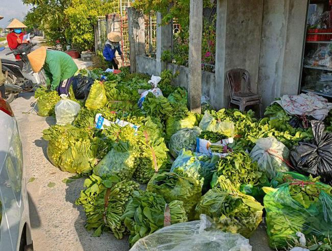 """Nghệ An: Hàng nghìn tấn rau đang """"nằm ruộng"""" chờ đầu ra... - Ảnh 9."""