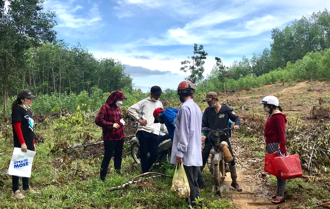 TT-Huế: Dân đổ xô lên vùng đồi núi hái loài cây bổ dưỡng đem bán, đút túi tiền triệu mỗi ngày  - Ảnh 1.