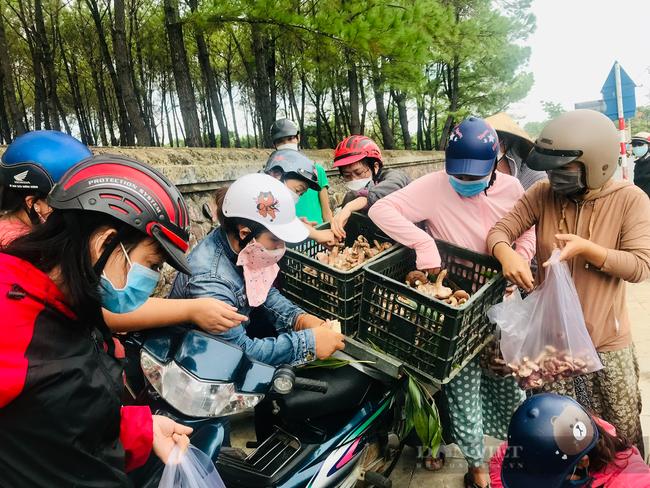 TT-Huế: Dân đổ xô lên vùng đồi núi hái loài cây bổ dưỡng đem bán, đút túi tiền triệu mỗi ngày  - Ảnh 5.