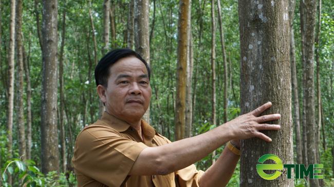 TT-Huế: WWF-Việt Nam viện trợ gần 5 tỷ đồng giúp người dân, doanh nghiệp quản lý rừng bền vững  - Ảnh 1.