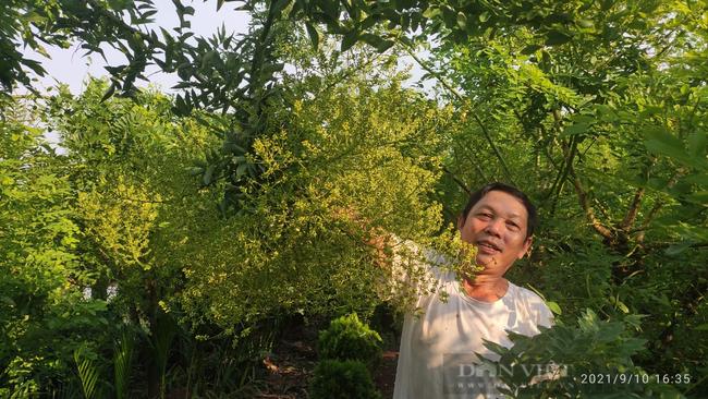 Thái Bình: Trồng loại cây ra thứ hoa quý, thu nhập trên 30 triệu/sào, nông dân ở đây mừng như trúng số. - Ảnh 1.