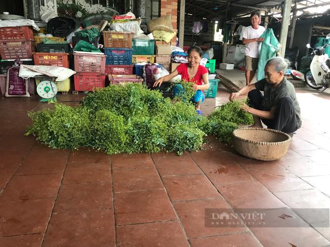 Thái Bình: Trồng loại cây ra thứ hoa quý, thu nhập trên 30 triệu/sào, nông dân ở đây mừng như trúng số. - Ảnh 4.