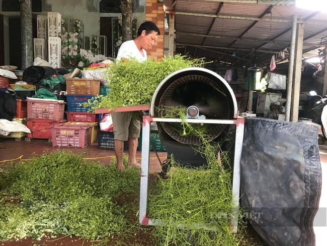 Thái Bình: Trồng loại cây ra thứ hoa quý, thu nhập trên 30 triệu/sào, nông dân ở đây mừng như trúng số. - Ảnh 3.