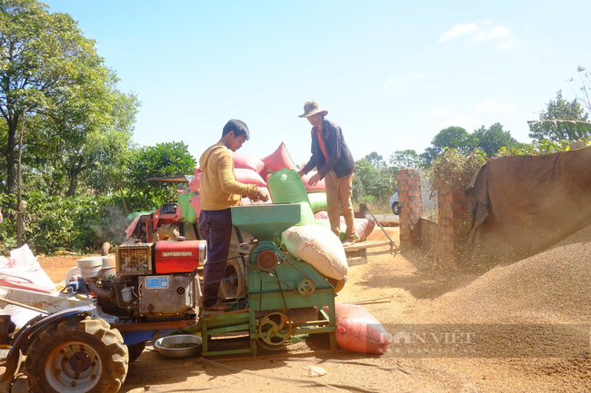 Giá cà phê tăng cao nhất trong 4 năm, Hàn Quốc đột nhiên mua nhiều cà phê của Việt Nam - Ảnh 1.