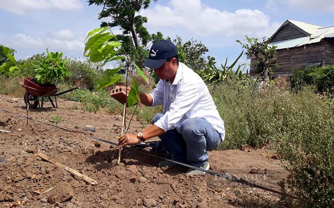Ông Đặng Tường Khanh bắt đầu trồng những cây ca cao đầu tiên trên đất Gia Lai. Ảnh: Nguyên Vỹ