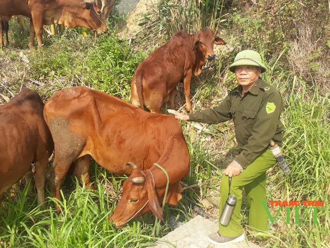 Nậm Nhùn phát triển chăn nuôi đại gia súc theo hướng bền vững - Ảnh 1.