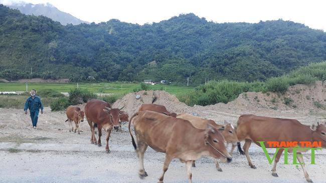 Nậm Nhùn phát triển chăn nuôi đại gia súc theo hướng bền vững - Ảnh 2.
