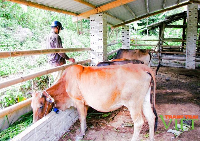Nậm Nhùn phát triển chăn nuôi đại gia súc theo hướng bền vững - Ảnh 3.