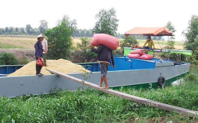 Nông dân tỉnh Long An thu hoạch lúa. Ảnh: Trần Đáng
