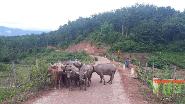 Nông dân Sìn Hồ phát triển nghề cơ khí, nuôi trâu sinh sản từ vốn hội - Ảnh 2.