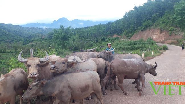 Nông dân Sìn Hồ phát triển nghề cơ khí, nuôi trâu sinh sản từ vốn hội - Ảnh 3.
