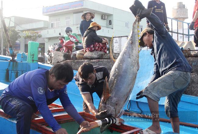 Thủ tướng: Xử lý nghiêm đường dây móc nối đưa tàu cá, ngư dân Việt Nam đi khai thác hải sản trái phép - Ảnh 2.