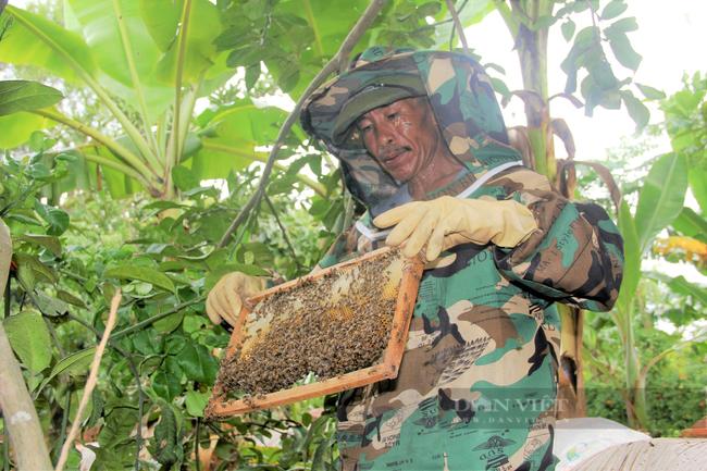 Hà Tĩnh: Nông dân gặp khó đầu ra mật ong do dịch Covid-19 - Ảnh 2.