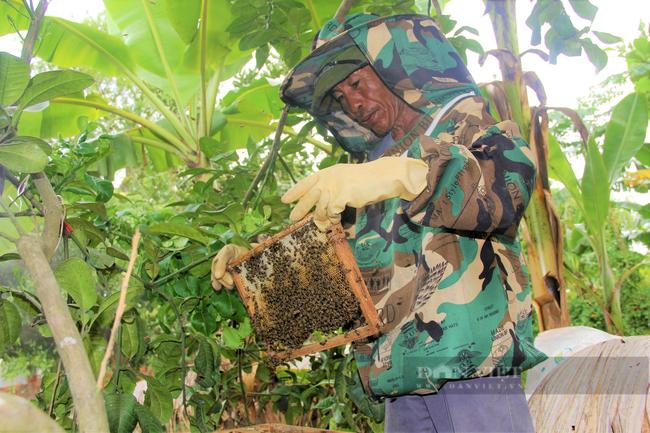 Hà Tĩnh: Nông dân gặp khó đầu ra mật ong do dịch Covid-19 - Ảnh 6.