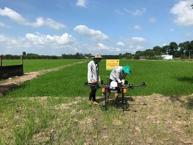 """Đất nhiễm phèn mặn và phụ thuộc vào… """"nước trời"""", các địa phương này vẫn tìm ra """"chìa khóa"""" để canh tác lúa hiệu quả - Ảnh 4."""