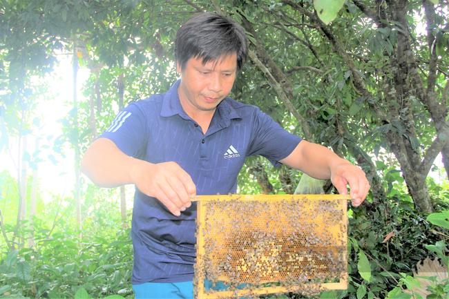 Hà Tĩnh: Nông dân gặp khó đầu ra mật ong do dịch Covid-19 - Ảnh 8.
