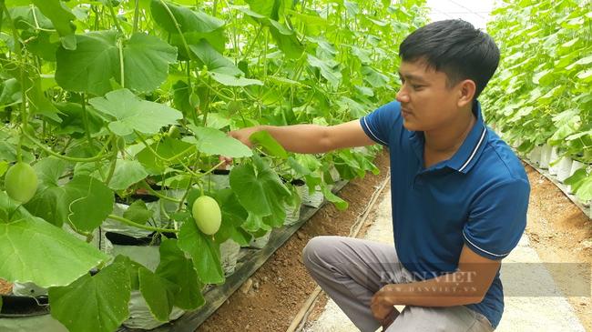 Lai Châu: Trồng dưa lưới trong nhà màng, mỗi cây để 1 quả mà thu gần 200 triệu đồng/vụ - Ảnh 1.