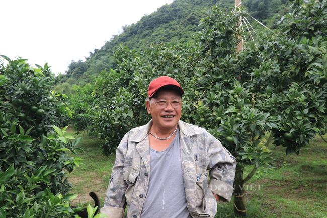 Lão nông và hành trình chinh phục cây cam Canh trên đất Bắc Sơn xứ Lạng  - Ảnh 1.
