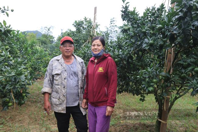 Lão nông và hành trình chinh phục cây cam Canh trên đất Bắc Sơn xứ Lạng  - Ảnh 2.