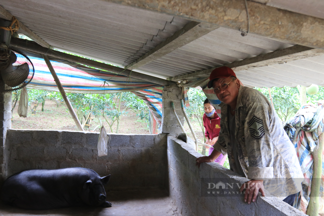 Lão nông và hành trình chinh phục cây cam Canh trên đất Bắc Sơn xứ Lạng  - Ảnh 3.