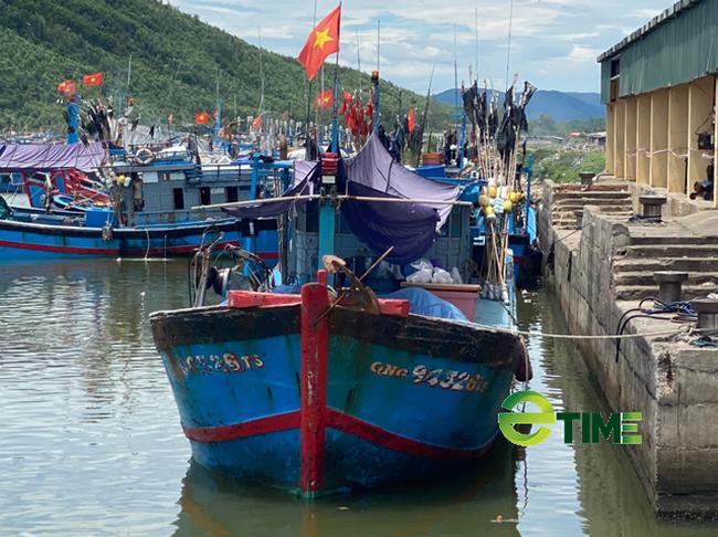 """Quảng Ngãi: Nhiều tàu về cảng bị kẹt """"lệnh cấm"""" đã được phép bán hải sản  - Ảnh 7."""