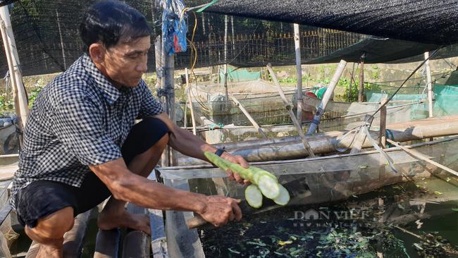 Ninh Bình: U70 nuôi đàn ốc thay cho tập thể dục, mỗi tháng kiếm hàng chục triệu đồng - Ảnh 5.