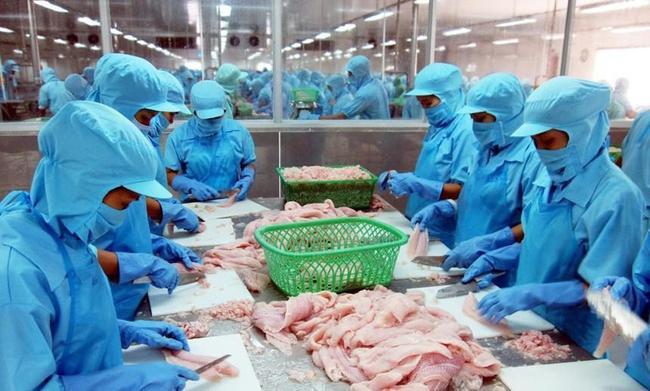 Sớm tiêm phủ vaccine cho lao động ngành thủy  sản - Ảnh 1.