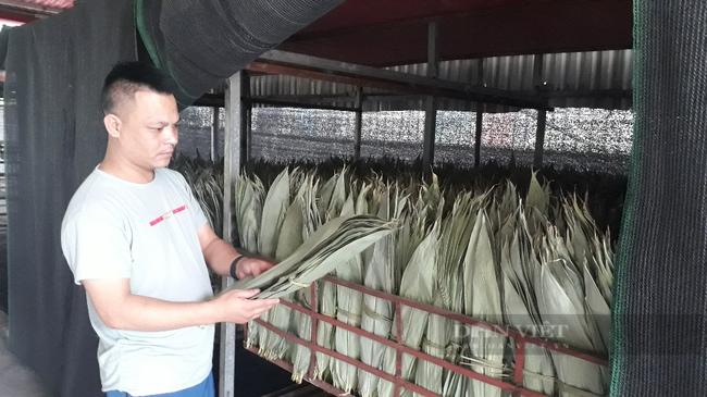 """Sấy thứ lá bỏ đi đem xuất khẩu, một công ty ở Lai Châu """"hái"""" ra tiền  - Ảnh 2."""