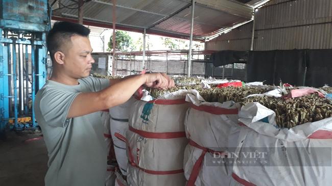 """Sấy thứ lá bỏ đi đem xuất khẩu, một công ty ở Lai Châu """"hái"""" ra tiền  - Ảnh 4."""