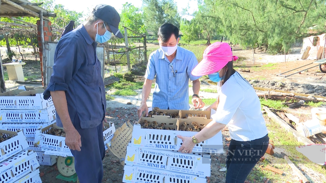 Quảng Nam: Đề án phát triển kinh tế vườn sẽ giúp nông dân không để đất trống mà còn nâng cao thu nhập - Ảnh 4.