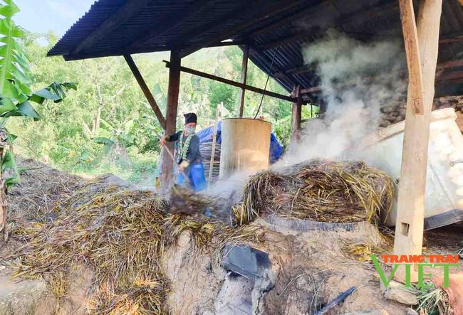 Lai Châu: Người trồng sả lao đao vì giá tinh dầu sả giảm - Ảnh 1.