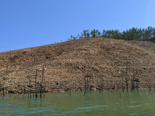 TT-Huế: Đề nghị truy thu tiền 3 doanh nghiệp thủy điện trồng 239ha rừng không có cây  - Ảnh 1.
