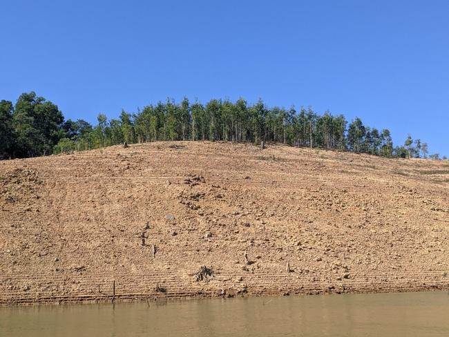 TT-Huế: Đề nghị truy thu tiền 3 doanh nghiệp thủy điện trồng 239ha rừng không có cây  - Ảnh 2.