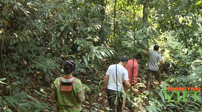 Nậm Nhùn nâng cao tỷ lệ độ che phủ rừng - Ảnh 1.