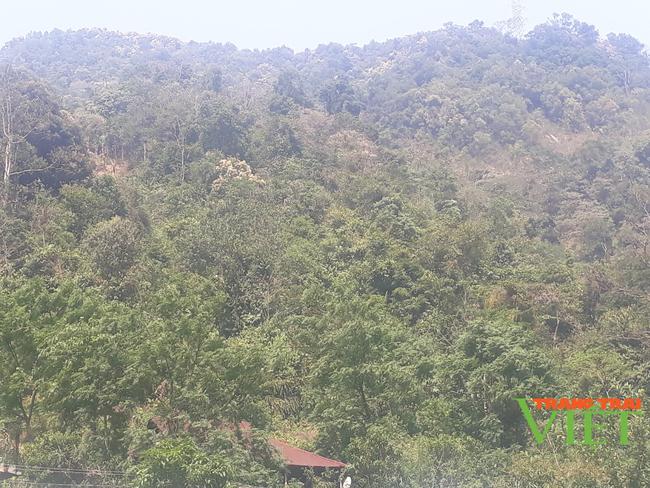 Nậm Nhùn nâng cao tỷ lệ độ che phủ rừng - Ảnh 2.