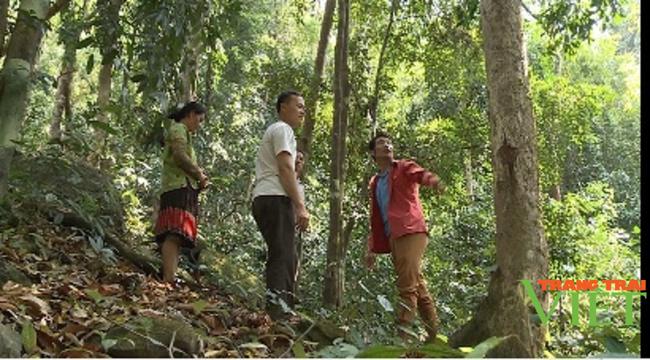 Nậm Nhùn nâng cao tỷ lệ độ che phủ rừng - Ảnh 3.