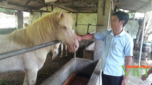 Nuôi ngựa bạch nấu cao, bán thương phẩm, một nông dân ở Lai Châu kiếm bộn tiền - Ảnh 1.