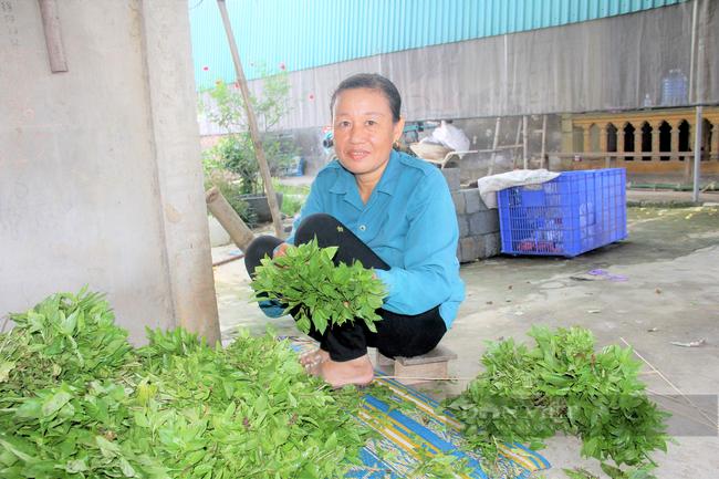 Hà Tĩnh: Nông dân nhìn cánh đồng rau gia vị ứa nước mắt vì bán rẻ như cho - Ảnh 4.