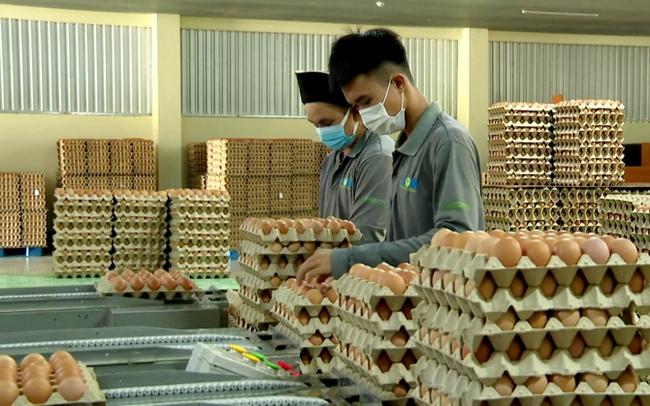 Công nhân làm việc bên trong nhà máy của công ty TS Farm. Ảnh: Sĩ Công