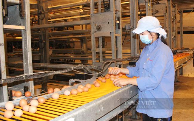 Bên trong nhà máy sản xuất trứng gà sạch của công ty Ba Huân đặt tại tỉnh Long An. Ảnh: Trần Khánh