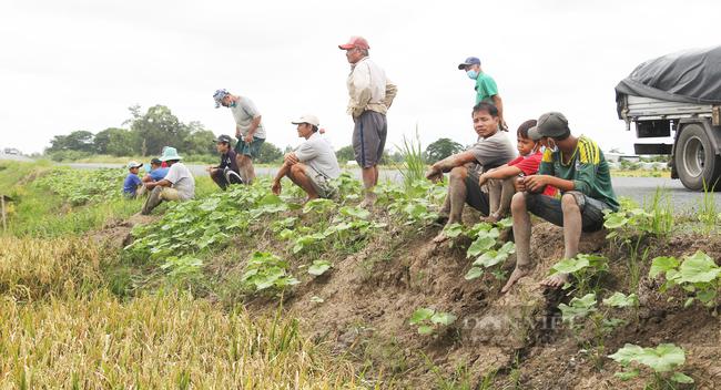 Cần Thơ: Thanh niên rủ nhau đi bắt chuột đồng trong những ngày đầu thu hoạch lúa Thu Đông 2021 - Ảnh 14.