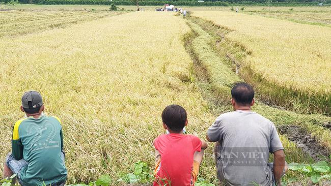 Cần Thơ: Thanh niên rủ nhau đi bắt chuột đồng trong những ngày đầu thu hoạch lúa Thu Đông 2021 - Ảnh 15.