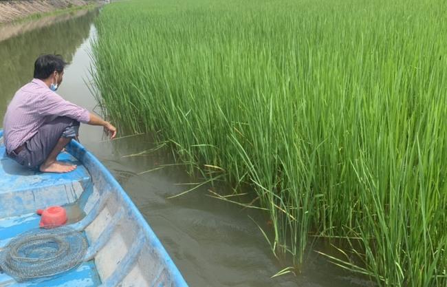 Nuôi cá linh, tôm càng xanh trên ruộng lúa mùa lũ - Ảnh 1.