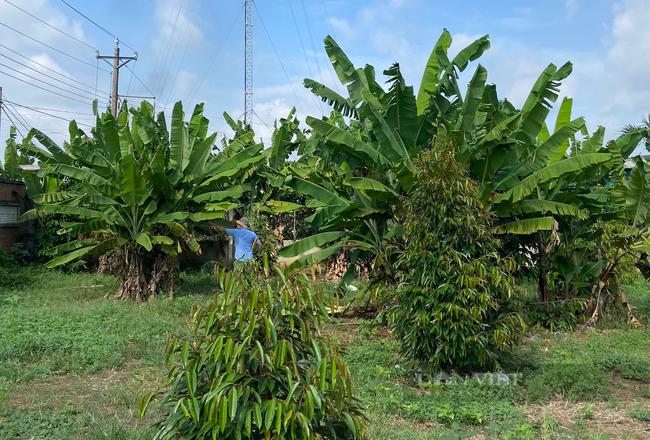 Đồng Nai:  đẩy mạnh hỗ trợ tiêu thụ nông sản - Ảnh 2.