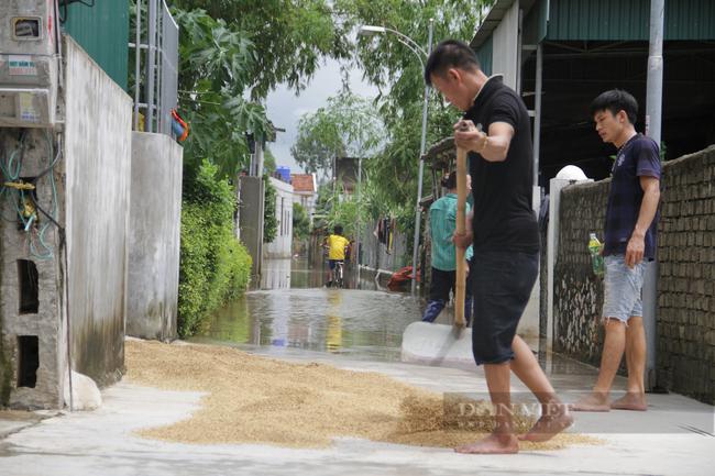 Nghệ An: Nước bắt đầu rút, hàng nghìn hét ta lúa, rau màu mất trắng   - Ảnh 2.
